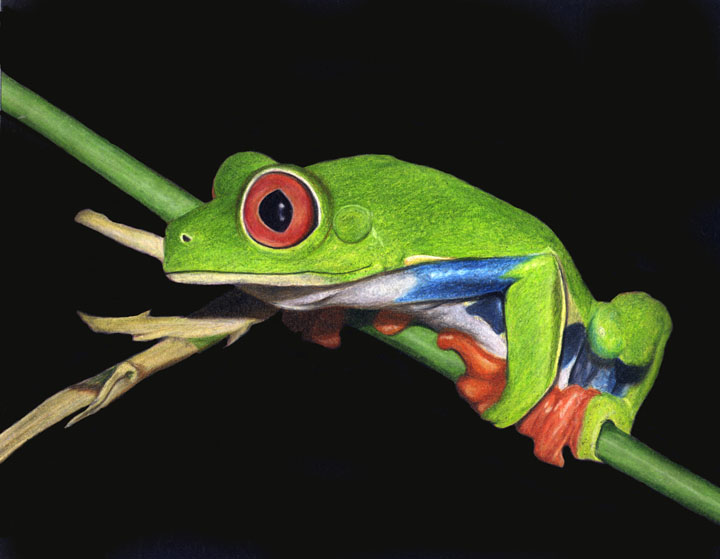 Red-Eyed Tree Frog SMALL