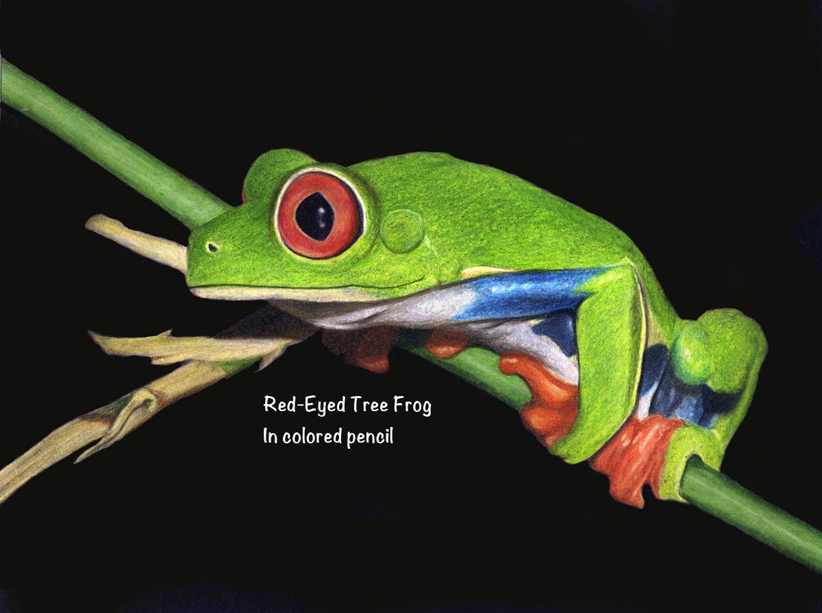 Corrina thurston colored pencil artist for Frog consulting