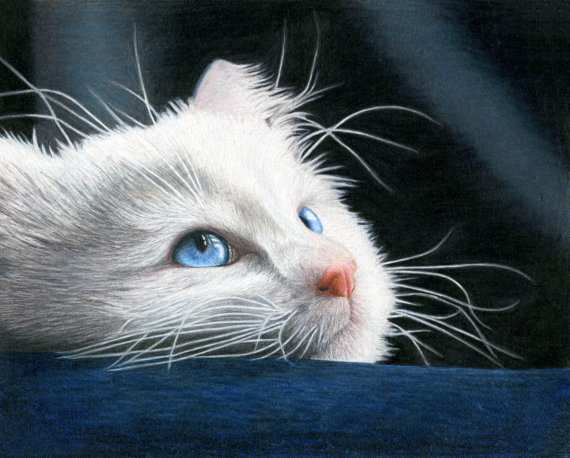 My Blue-Eyed Kitten colored pencil drawing.