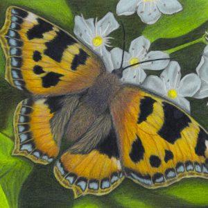 Butterfly-570