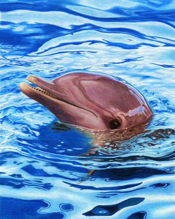 Dolphin-570