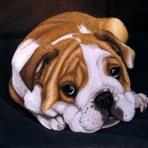 English-Bulldog-Puppy-570