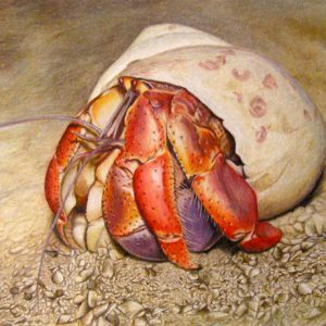 Hermit Crab In colored pencil
