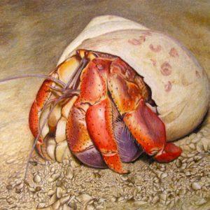 Hermit-Crab-570