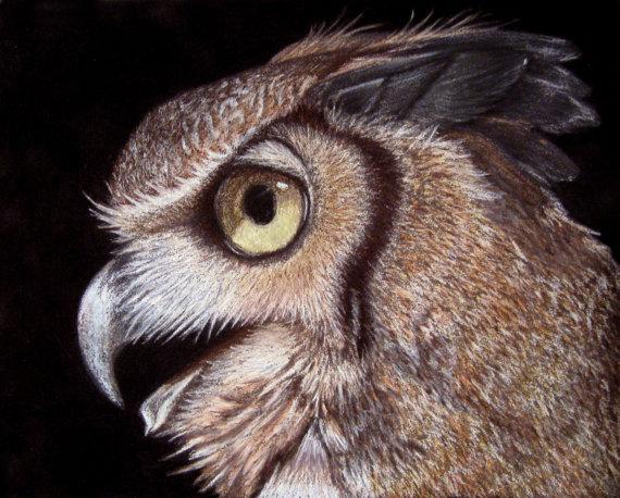 Horned-Owl-570
