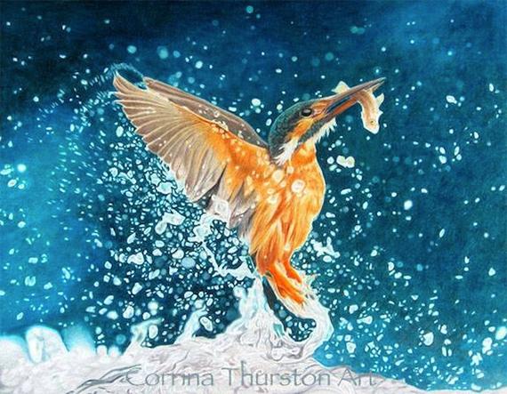Kingfisher-570