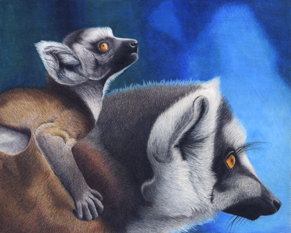 Lemurs In colored pencil