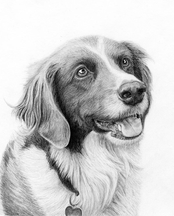 """""""Max"""" in graphite. This was commissioned a couple years ago and was given as a Mother's Day gift!"""