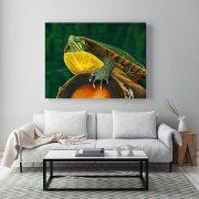 Painted-Turtle-in-situ-living-room-metal-web