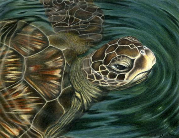 Sea-Turtle-570