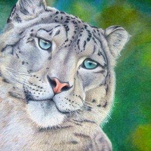 Snow-Leopard-570