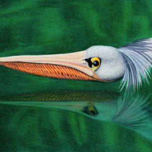 Swooping-Pelican-570