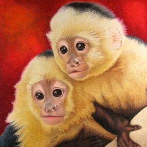 Two-Capuchin-Monkeys-504
