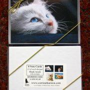 cat-box-2