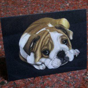 english-bulldog-puppy