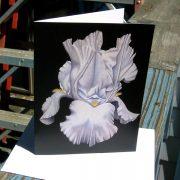 majestic-iris