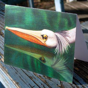 swooping-pelican