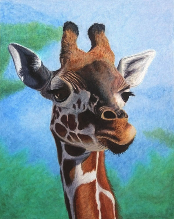 Giraffe In colored pencil on mixed media board 8x10 inches big Reference photo by Crystal Stacey.