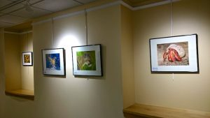 Part of a solo exhibit at Gifford Hospital, February 2016