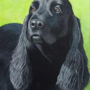 The finished drawing of Jada, 11x14 inches big, in prismacolor pencils on mixed media board.