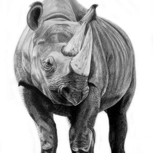 Rhino WEB (w:out pencils)