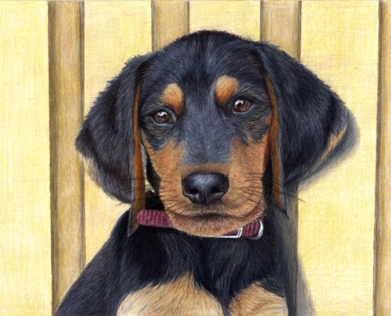 Beagle Dachshund Puppy Prints Corrina Thurston