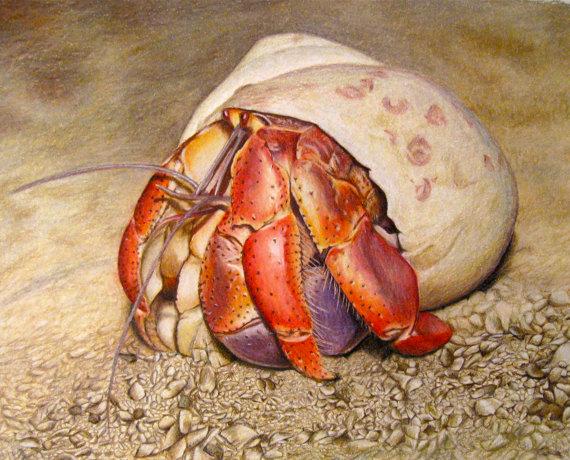 hermit crab prints corrina thurston