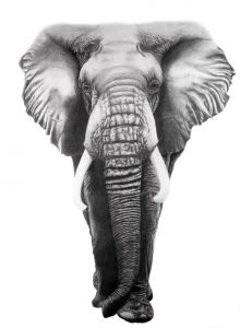 African Elephant In Graphite & Colored Pencil 18x24 inches big