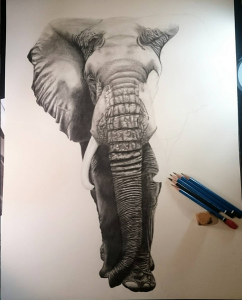 African Elephant work in progress. All that's left is the right side of the head and the right ear.