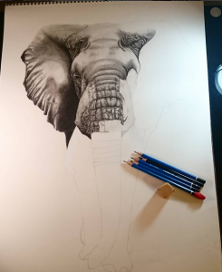 African Elephant work in progress. Most of the head is finished, and about to start the trunk.