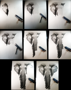 The African Elephant drawing was complex because of all the details in the elephant's skin. So I worked section by section, some smaller, some bigger, until it was a whole drawing.