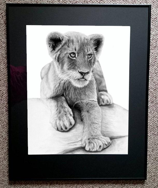 Lion Cub - Prints - Corrina Thurston