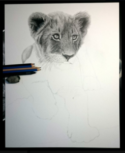 On The Drawing Table Archives Corrina Thurston New project in my collection, cute and small lion cub model, hope you will like it) zbrush, mari, maya, xgen, and arnold are the main software which i've used for this project. on the drawing table archives corrina